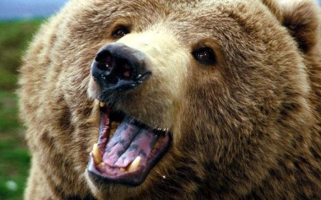 Like...REALLY happy Bear