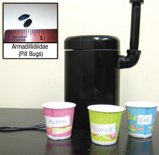 Bugcruncher